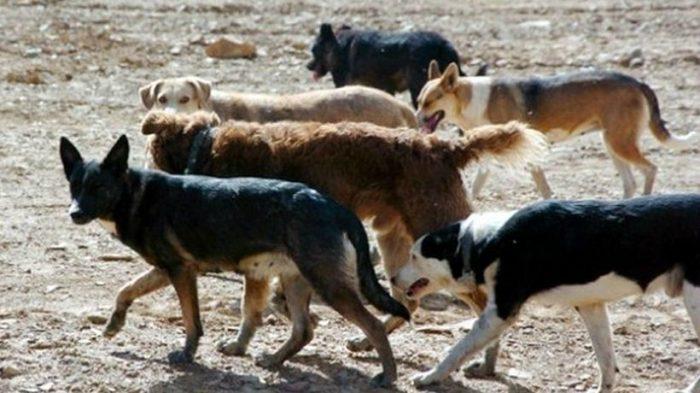 Perros: un problema de justicia socio-ambiental