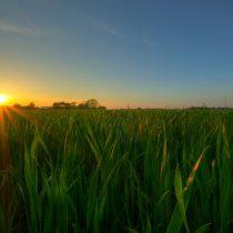 Día del sol: la gran fuente de energía renovable