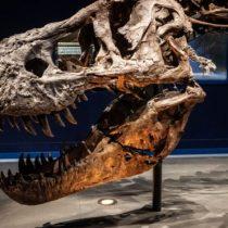 Descubrimiento en Argentina revela nuevas teorías sobre el crecimiento de dinosaurios gigantes
