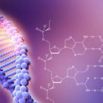 CRISPR/Cas9: las serias advertencias de unos científicos sobre los peligros de la técnica que revolucionó la genética