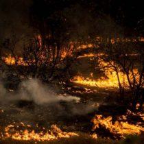 La colusión del fuego: Conaf estudia acciones legales contra empresas encargadas de apagar incendios forestales por