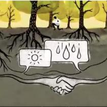 La extraordinaria red oculta que permite a los árboles ayudarse o atacarse entre sí