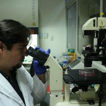 Peces, moscas y ratones protagonizan estudio chileno sobre desarrollo del cerebro publicado en