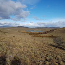 Reconocida familia plantará árboles en la Patagoniapara combatir el impacto del cambio climático