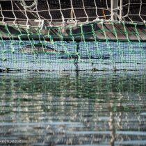 """Greenpeace y escape de más de 800.000 salmones con antibióticos: """"Fugas mucho menores han sellado la suerte de la industria en otros países"""""""