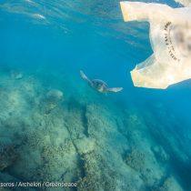 Greenpeace y rechazo del TC a requerimiento de industriales del plástico: