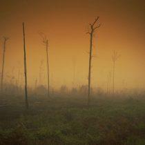 """Greenpeace ante ola climática extrema que recorre el mundo:""""Son síntomas de un planeta cada vez más enfermo"""