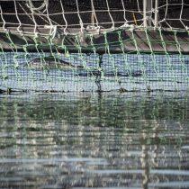 """Greenpeace denuncia graves consecuencias de masivo escape de salmones: """"Equivalen a una plaga de más de 140 millones de ratones"""""""