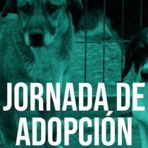 Día del Niño: Jornada de adopción de mascotas en Parque Bicentenario