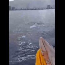 Iquique: Pescadores logran grabar espectacular avistamiento de delfines