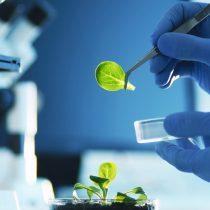 Biotecnología y sostenibilidad agrícola
