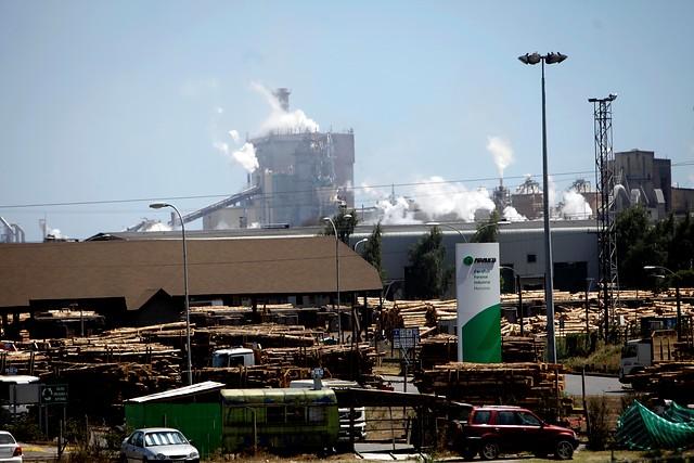 Arauco aprueba proyecto MAPA: la mayor inversión forestal de Chile por US$ 2.350 MM