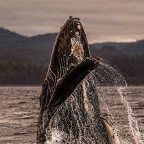 Así canta el coro que recrea sonidos de cetáceos y por qué lo hace