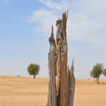 Ecología: El mundo pierde sus bosques más rápido que nunca