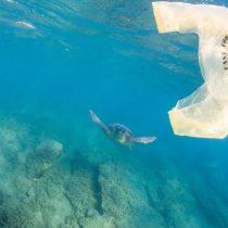 Greenpeace celebra rechazo a requerimiento de industriales del plástico: