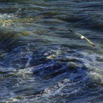 Científicos sentencian: Solo el 13% del agua de los océanos permanece virgen
