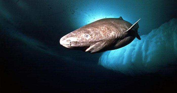 Descubren que peces evolucionan más rápido en aguas polares que en el trópico
