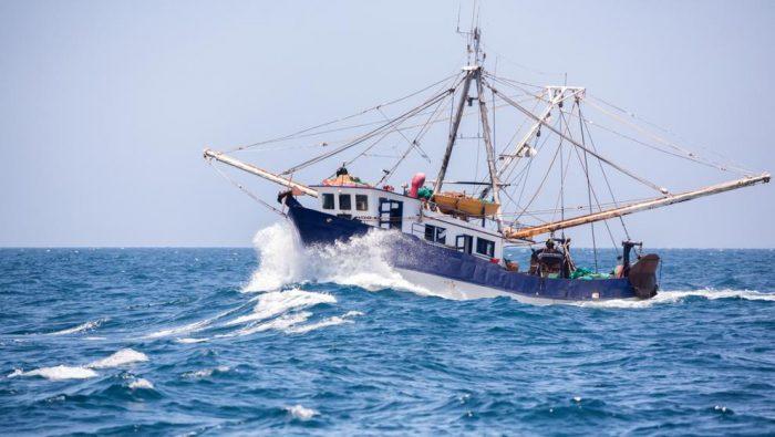 Cambio climático amenaza con transformar los ecosistemas marinos: pesca podría disminuir hasta un 12 % para 2050