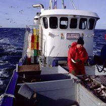FAO alerta aumento en la sobreexplotación de recursos pesqueros