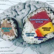 La científica que usa sushi para explicar el funcionamiento del cerebro