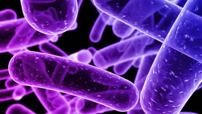 Las bacterias en un didáctico libro para escolares y educadores