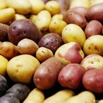 Científicos advierten que cambio climático produce cultivos menos nutritivos