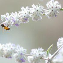 El polen de las flores sirve de herramienta científica para conocer el pasado