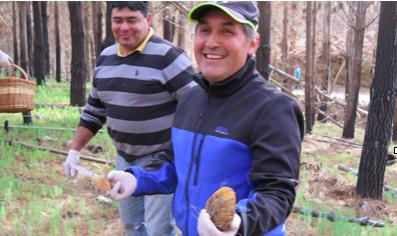 Cómo Empedrado renace desde las cenizas gracias al tradicional cultivo de hongos