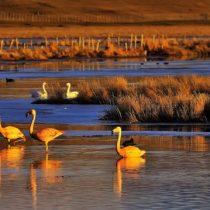 Ley nacional para la protección de humedales, ¿por qué no?