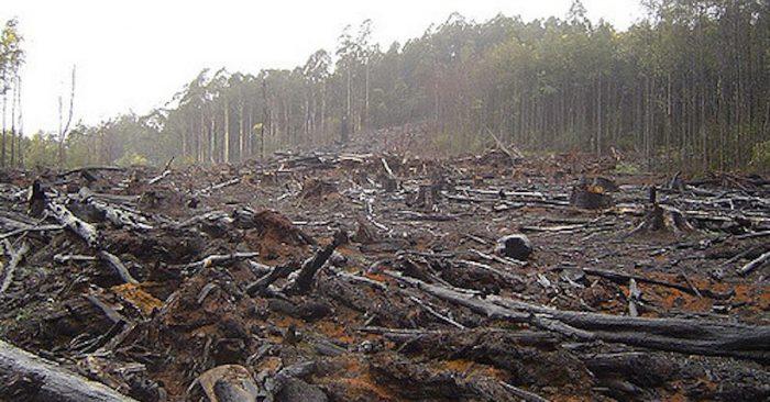 Chile país OCDE: inequidad, reactivación económica y depredación del Medio Ambiente