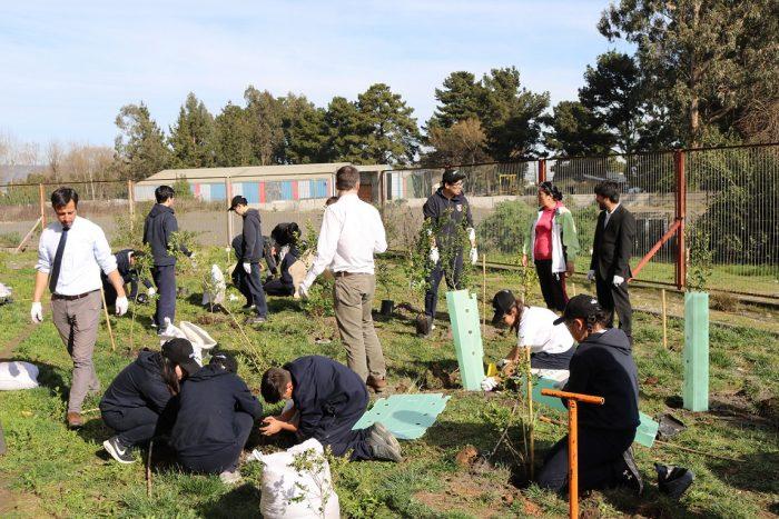 Realizan trabajos de reforestación nativa en la región del Bio Bio