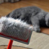 ¿Qué hacer para evitar que los pelos de tu gato estén por todos lados?
