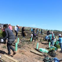 Reforestan cinco mil árboles nativos