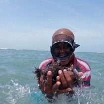 Las mujeres que bucean con saris para recolectar algas