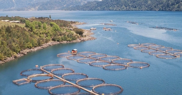 Salmonicultura sin control: Contraloría acusa una serie de faltas de fiscalización de Sernapesca, Subpesca y otros organismos estatales en el sector