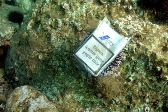 """El """"cáncer medio ambiental"""" de las colillas de cigarrillos"""