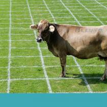 Animales en la Constitución: la campañaque busca incluir a los animales por primera vez en la carta magna