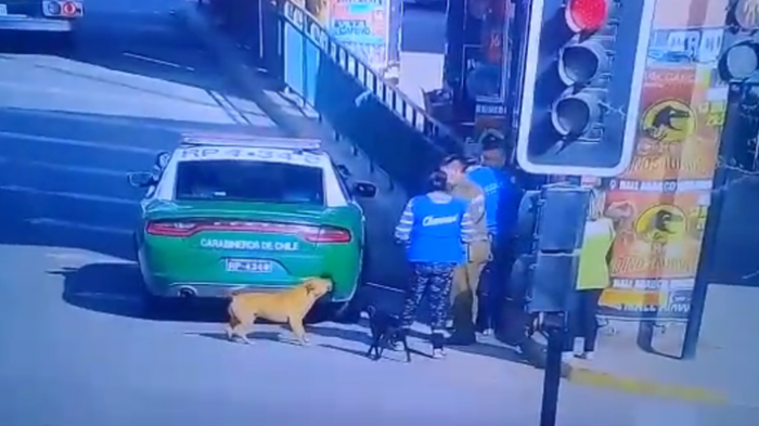 Carabineros abre sumario a cabo que disparó y mató a perro en Quilicura