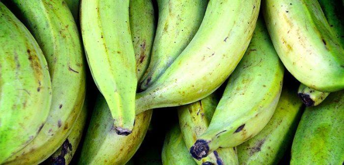 Elaboran alimento contra la diabetes basado de plátano verde