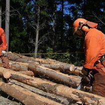Una nueva estrategia de usurpar tierras mapuche: la legalización de la injusticia