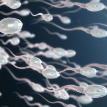 Qué es el varicocele, una de las causas más comunes de infertilidad masculina