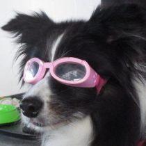 Miopía: las mascotas también pueden necesitar lentes
