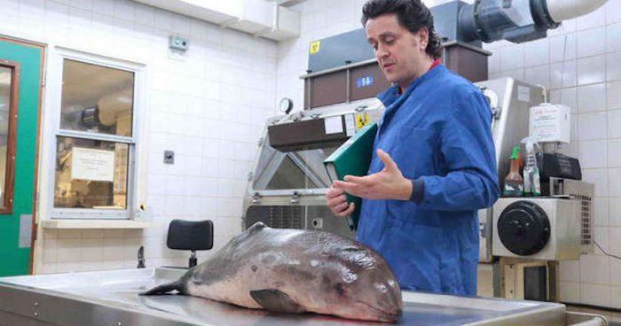 CSI del Mar: los científicos forenses marinos de Gran Bretaña
