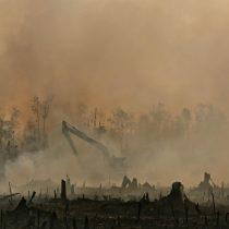 Investigación de Greenpeace expone cómo grandes marcas destruyen bosques en Indonesia