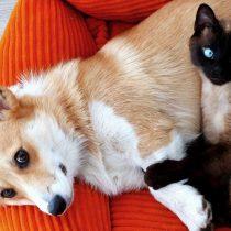 Mascotas longevas: ¿Cómo cuidar su alimentación?