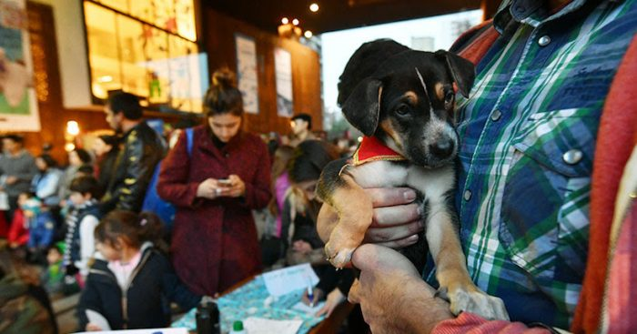 Jornada de Adopción de Mascotas en Centro GAM