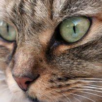 Por qué un pueblo en Nueva Zelanda quiere prohibir los gatos