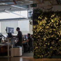 Oficinas más sustentables influyen en el desarrollolaboral de los trabajadores