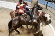 """El rodeo no es deporte"": Organización animal lanza video con la cruda realidad del rodeo"