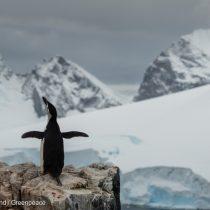 Nuevo mapa es el mejor del mundo: la Antártica en alta resolución